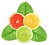 ID 3033217 | Trzy plasterki owoców cytrusowych na zielonych liści | Foto stockowe wysokiej rozdzielczości | KLIPARTO