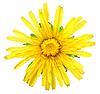 ID 3033266 | Eine gelbe Blume von Löwenzahn | Foto mit hoher Auflösung | CLIPARTO