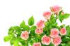 Отделения светло-розовые розы | Фото