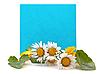 ID 3013762 | Niebieskie miejsca dla tekstu ze świeżych kwiatów | Foto stockowe wysokiej rozdzielczości | KLIPARTO