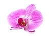 ID 3014017 | Rosa Orchidee | Foto mit hoher Auflösung | CLIPARTO