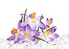 ID 3014619 | Krokusblumen in Eis | Foto mit hoher Auflösung | CLIPARTO