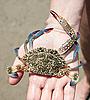 ID 3014639 | Marine kraba w dłoni | Foto stockowe wysokiej rozdzielczości | KLIPARTO