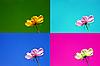 ID 3014650 | Pocztówki w czterech różnych kolorach, z delikatnym kwiatem. | Foto stockowe wysokiej rozdzielczości | KLIPARTO