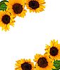 Rahmen von Sonnenblumen | Stock Photo