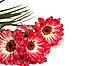 ID 3018758 | 과꽃의 꽃다발입니다. | 높은 해상도 사진 | CLIPARTO
