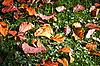 ID 3018913 | Jesienne liście na zielonej trawie w wiązki promieni słonecznych. | Foto stockowe wysokiej rozdzielczości | KLIPARTO