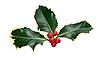 ID 3018918 | Blätter und Beeren von Stechpalme | Foto mit hoher Auflösung | CLIPARTO