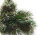 ID 3018932 | Fichte-Zweige im Schnee | Foto mit hoher Auflösung | CLIPARTO