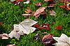 ID 3019078 | Jesienne liście | Foto stockowe wysokiej rozdzielczości | KLIPARTO
