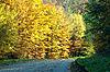 ID 3019087 | Дорога в осеннем лесу | Фото большого размера | CLIPARTO