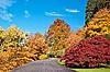 ID 3019104 | Droga w lesie jesienią. | Foto stockowe wysokiej rozdzielczości | KLIPARTO