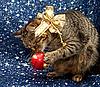 크리스마스 장식 공 고양이 놀이 | Stock Foto