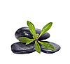 ID 3019219 | Handvoll Steine mit grüner Pflanze | Foto mit hoher Auflösung | CLIPARTO