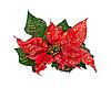 ID 3019234 | Weihnachtsblume | Foto mit hoher Auflösung | CLIPARTO