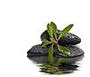 ID 3019249 | Garść kamieni z młodych roślin zielonych. | Foto stockowe wysokiej rozdzielczości | KLIPARTO