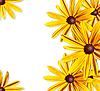 ID 3019312 | Rahmen der gelben Blumen | Foto mit hoher Auflösung | CLIPARTO