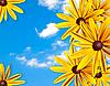 框架的黄色花朵在蓝天的映衬 | 免版税照片