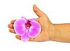 ID 3024380 | Orchid in der Hand | Foto mit hoher Auflösung | CLIPARTO