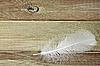 ID 3037767 | Weiße Feder auf dem Brett | Foto mit hoher Auflösung | CLIPARTO
