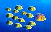 ID 3015434 | Führung Konzept mit Fische | Foto mit hoher Auflösung | CLIPARTO