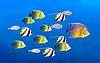 Führung Konzept mit Fische | Stock Foto