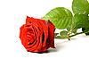 ID 3015482 | Rote Rose auf Weiß | Foto mit hoher Auflösung | CLIPARTO