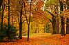 ID 3015750 | Herbstliche Allee | Foto mit hoher Auflösung | CLIPARTO