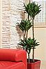 ID 3016756 | Rotes Ledersofa und grüne Pflanze | Foto mit hoher Auflösung | CLIPARTO