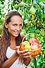 ID 3016788 | 美丽的小姐在花园里与苹果 | 高分辨率照片 | CLIPARTO