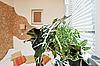 ID 3016919 | Sonniges Schlafzimmer mit grünem Pflanzeblatt | Foto mit hoher Auflösung | CLIPARTO