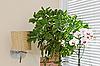 ID 3016924 | Орхидея и зеленое растение перед жалюзями | Фото большого размера | CLIPARTO