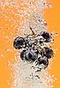 ID 3017041 | Weintraube fällt in Wasser | Foto mit hoher Auflösung | CLIPARTO