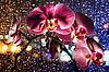 ID 3017138 | Różowa orchidea z kropli | Foto stockowe wysokiej rozdzielczości | KLIPARTO