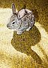 ID 3017262 | Kaninchen auf dem Teppich | Foto mit hoher Auflösung | CLIPARTO