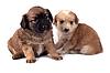 Dwa małe psy | Stock Foto