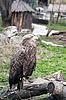 ID 3017667 | Orzeł w zoo | Foto stockowe wysokiej rozdzielczości | KLIPARTO