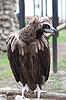 ID 3017672 | Adler im Zoo | Foto mit hoher Auflösung | CLIPARTO