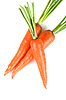 ID 3021000 | Karotten | Foto mit hoher Auflösung | CLIPARTO
