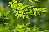 ID 3027514 | Grüne Blätter im Wasser | Foto mit hoher Auflösung | CLIPARTO