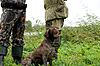 ID 3027524 | Jäger mit Hund | Foto mit hoher Auflösung | CLIPARTO