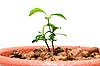 ID 3029394 | Keim in kleinen Blumentopf | Foto mit hoher Auflösung | CLIPARTO