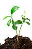 ID 3029777 | Pflanze im Grund | Foto mit hoher Auflösung | CLIPARTO