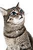 ID 3030098 | Kot z zielonymi oczami | Foto stockowe wysokiej rozdzielczości | KLIPARTO