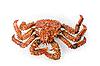 ID 3030739 | The King crab  | Foto stockowe wysokiej rozdzielczości | KLIPARTO