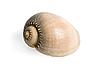 ID 3030755 | 贝壳 | 高分辨率照片 | CLIPARTO