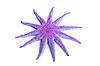 ID 3030762 | Green starfish | Foto stockowe wysokiej rozdzielczości | KLIPARTO