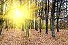 ID 3030906 | Herbstlicher Wald | Foto mit hoher Auflösung | CLIPARTO