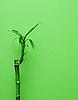 Bamboo roślin | Stock Foto