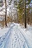 ID 3036345 | Droga w lesie zima | Foto stockowe wysokiej rozdzielczości | KLIPARTO
